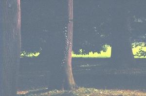 albero e edera 2